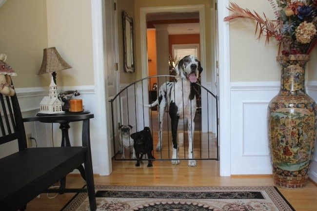 why gates are a must for young families with pets leesburg va